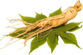 Ginseng ingrediens